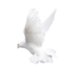 dove 4.png