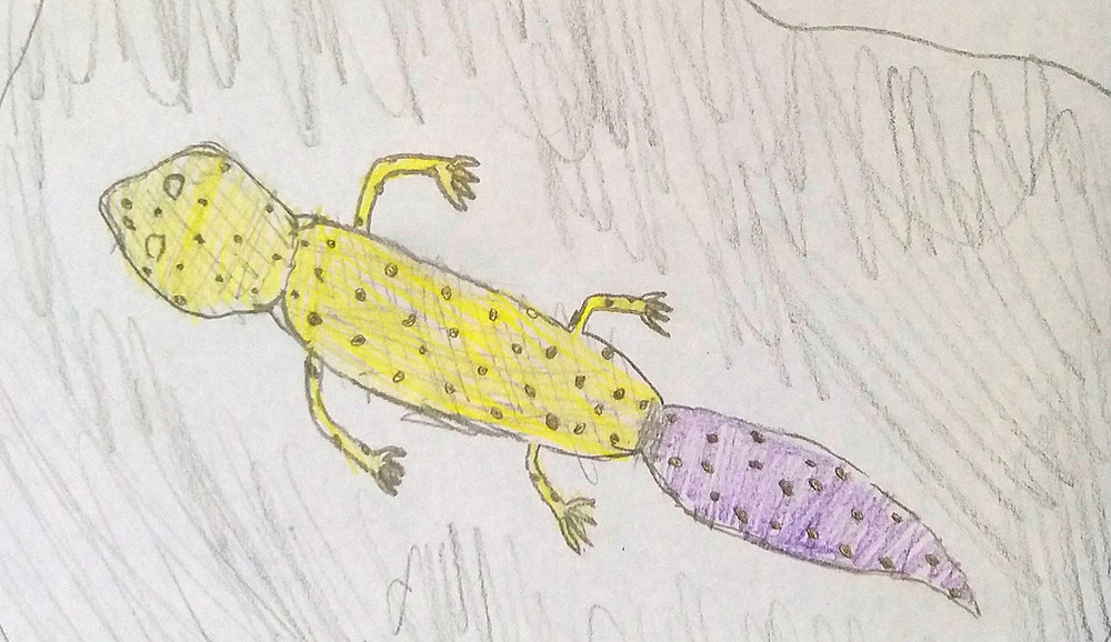 child drawing of gecko