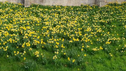 Springtime in York!