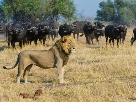 London Princess turned Safari Queen: How Botswana changed me for the better