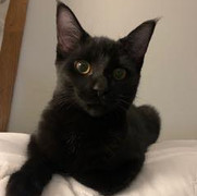 CIB Adoption #1 - Roxy