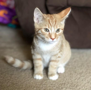 CIB Adoption #7 - Mason