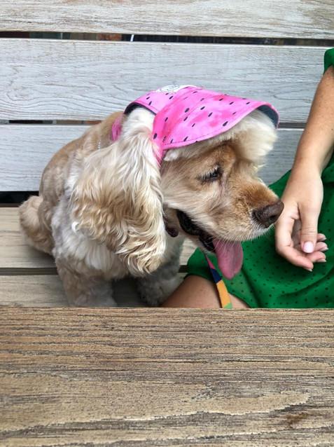 Watermelon Dog Cap