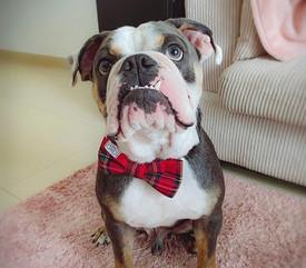 Red Luxury Bow Tie