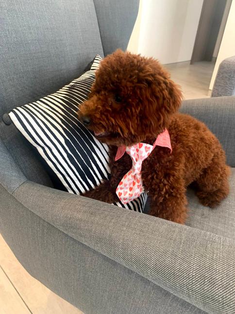 Shirt Collar and Necktie
