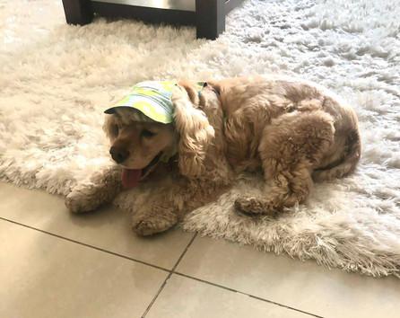 Kiwi Dog Cap