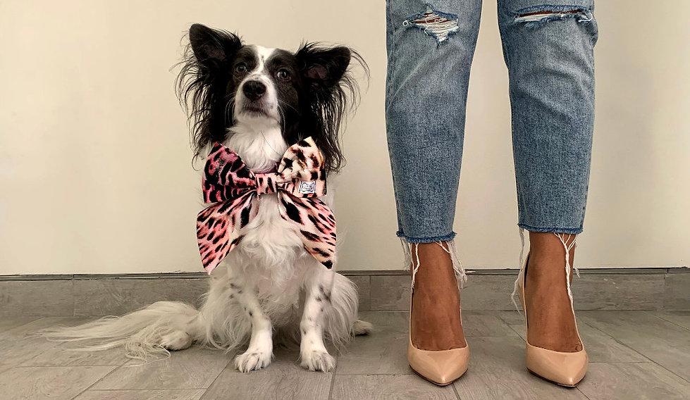Cão Estilo Couture
