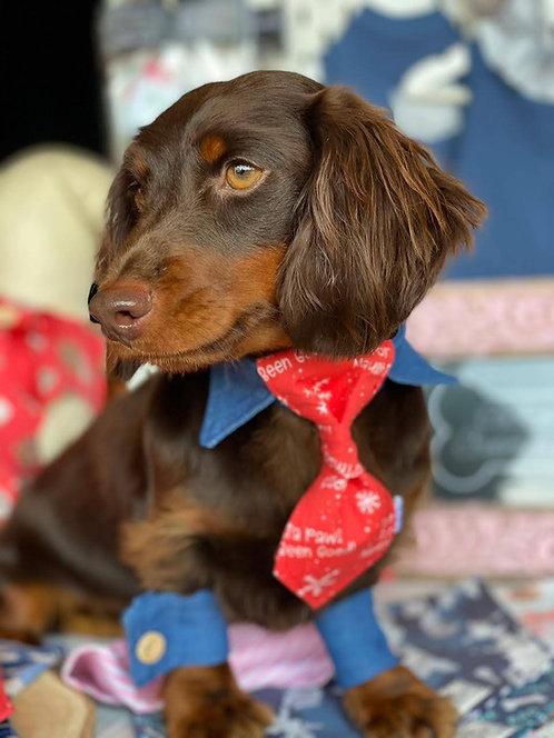Shirt Collar Necktie & Cuffs