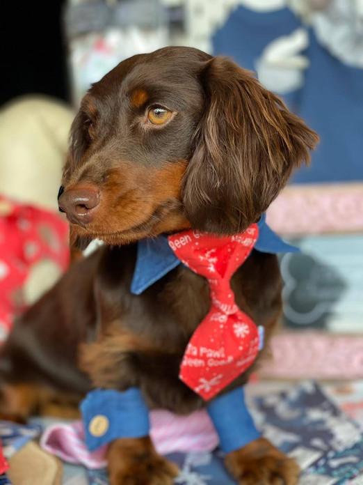 Dog Shirt Collar & Cuff