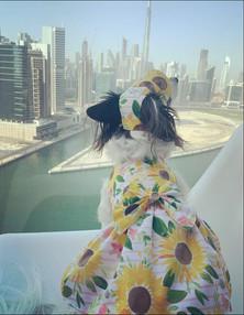 The Lazy Daisy Sunflowers Dress