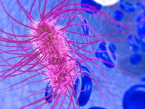 Expression, purification and characterization of Macrobrachium rosenbergii nodavirus capsid protein