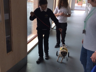 Therapy Dog at School