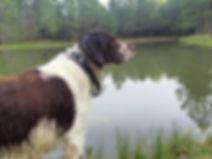 Bird Dog Development - Coach - Southeast Texas