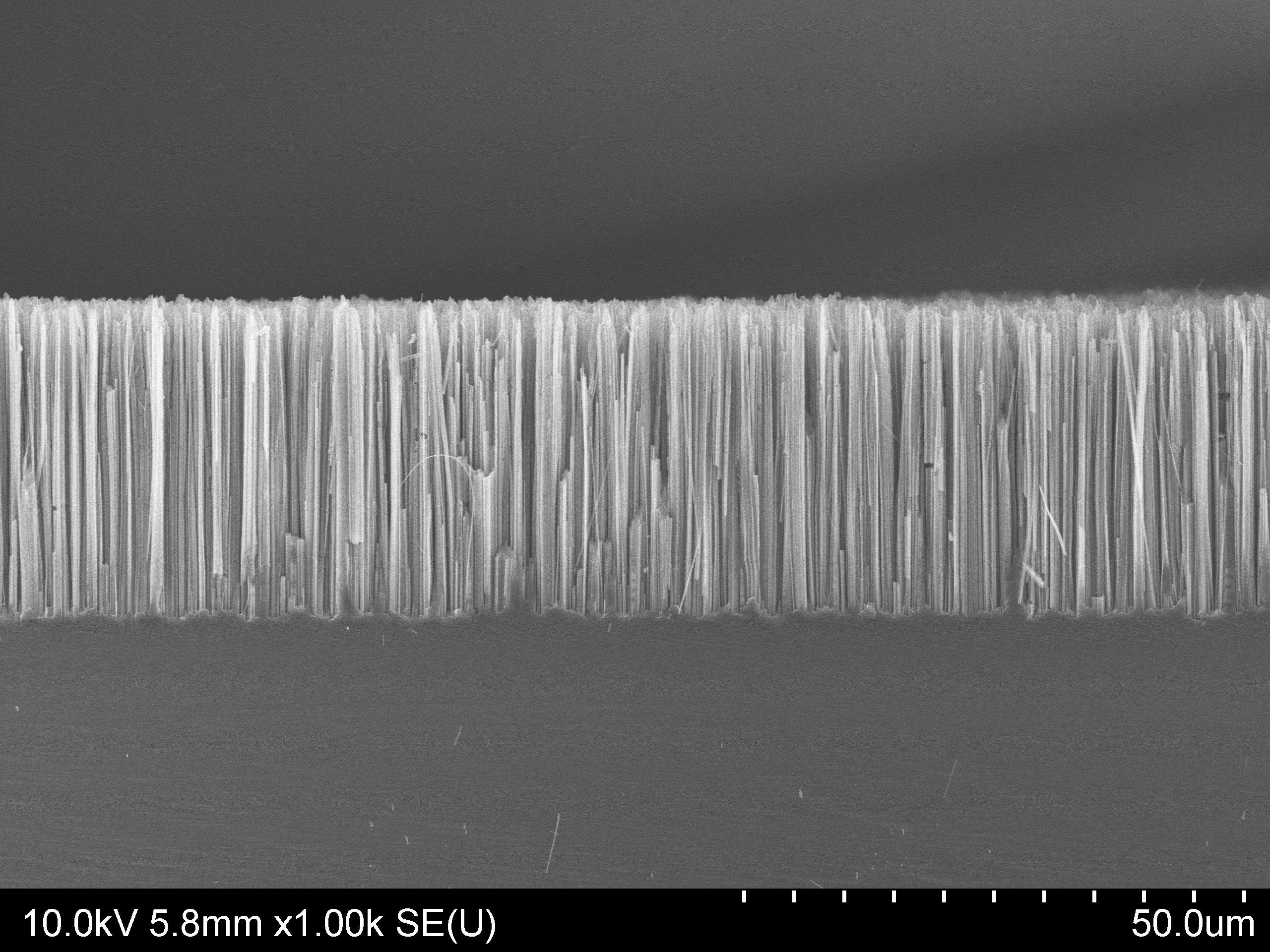 Silicon Nanowires