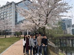 Cherry Blossom Picnic