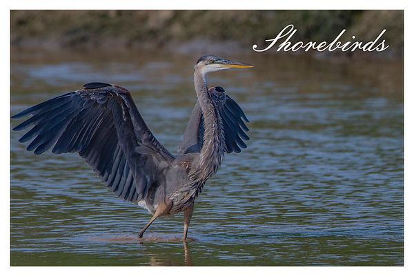 xshorebirds.jpg