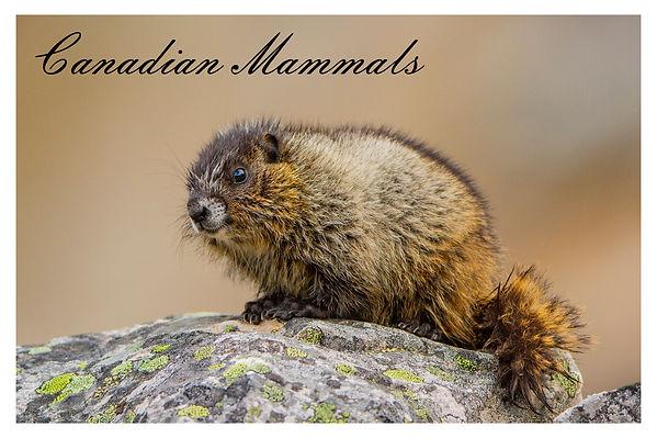 x mammals.jpg