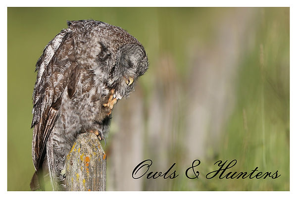 x Owls.jpg