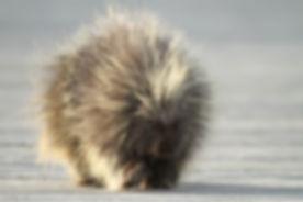 x29 Porcupine 19 xxx mmm book.JPG