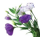 purpleflowers.png