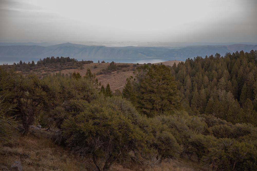 Limber Pine Trail in Logan Canyon overlooking Bear Lake, Utah