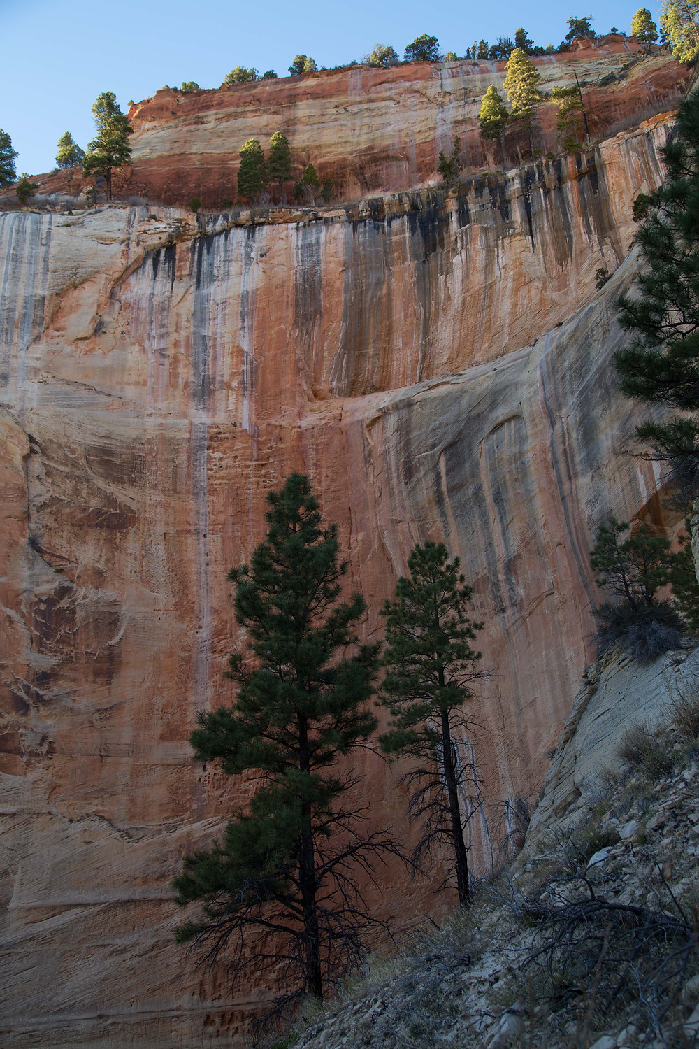 The West Rim Trail eventually descends into the main canyon of Zion National Park, Utah