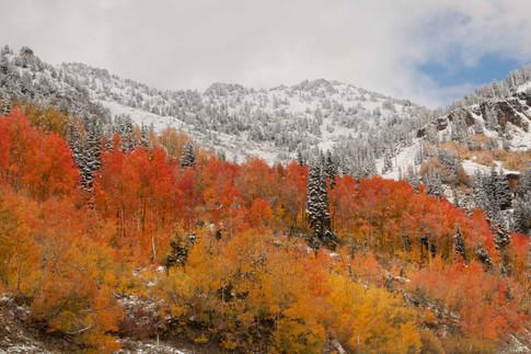 Fall Meets Winter, Little Cottonwood Canyon