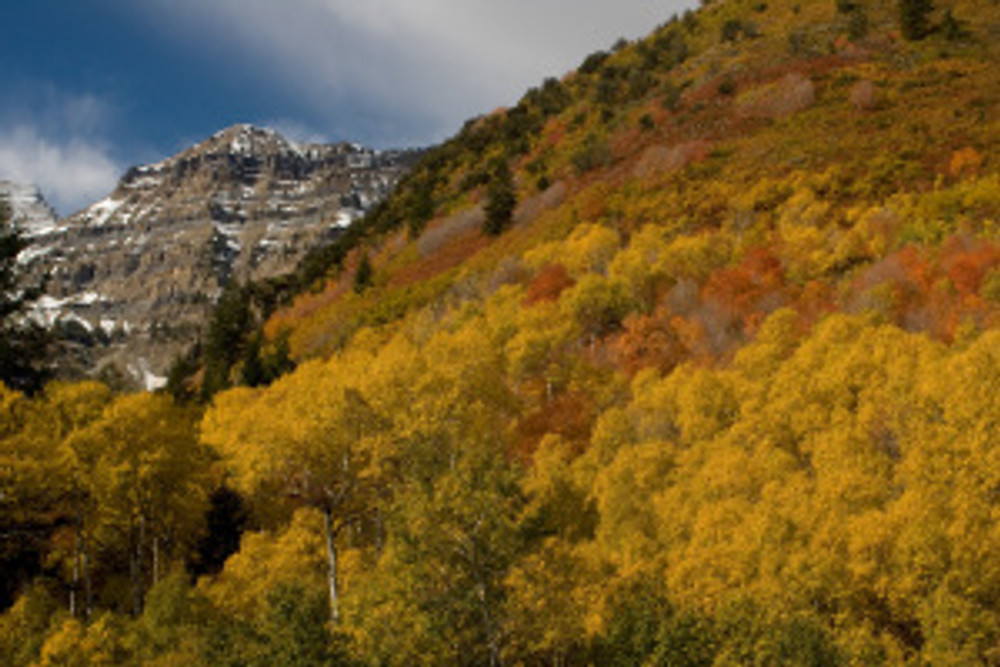 Fall colors cover the slopes around the Aspen Grove Area on the Alpine Loop Road