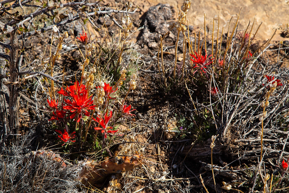 While the Needles is a dry mountain desert filled with cactus and sage brush, the occasional flower can still be found