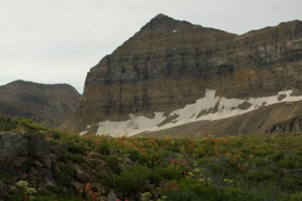View of Timpanogos peak with wildflowers below