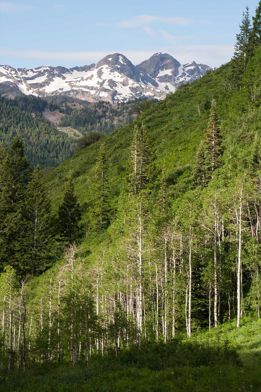 Photo on the trail to Dog Lake from Big Cottonwood Canyon, Mill D, near Salt Lake City, Utah
