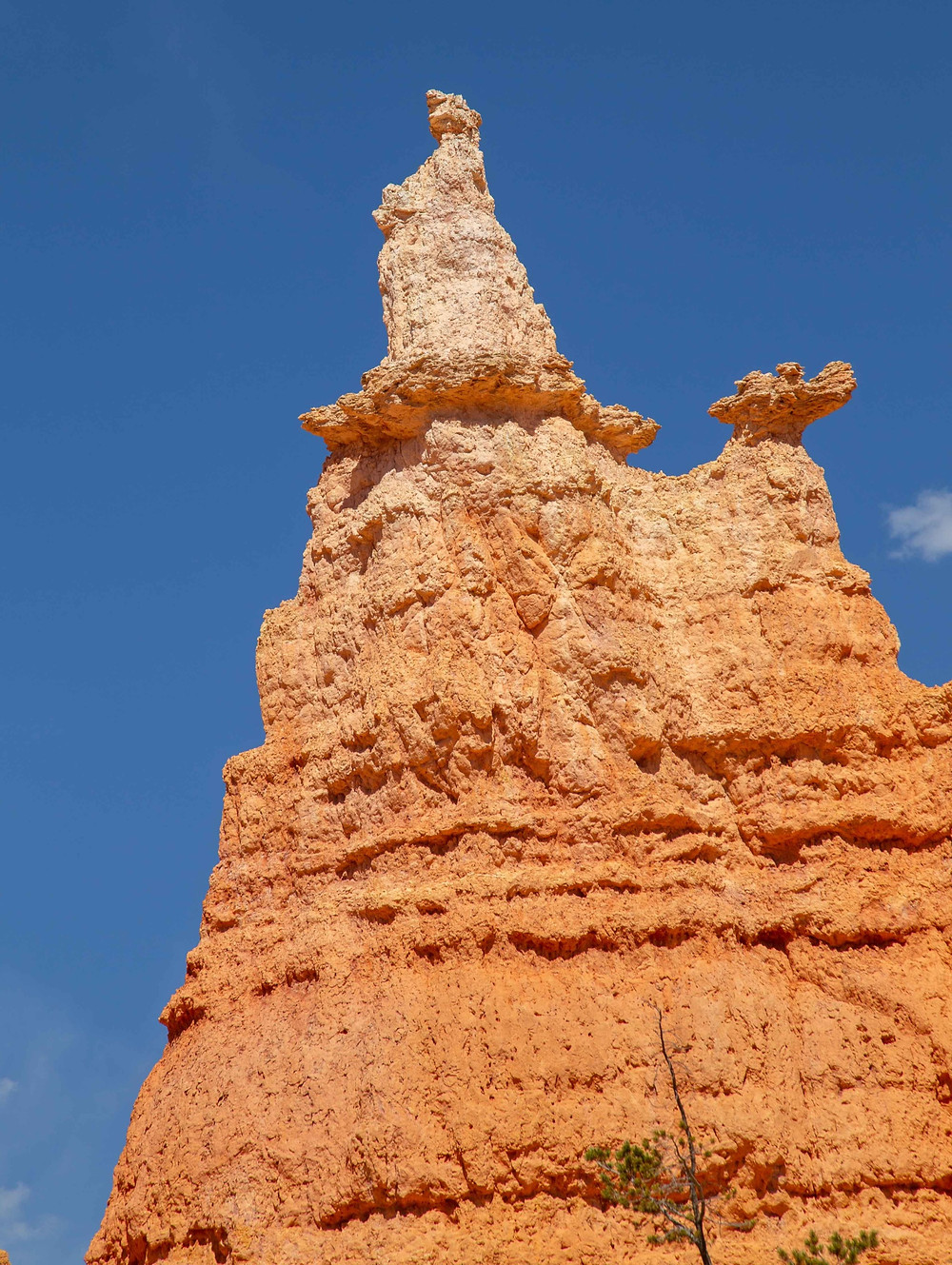 Picture of the Queen Victoria Hoodoo on the Queen's Garden Trail in Bryce Canyon National Park in Utah