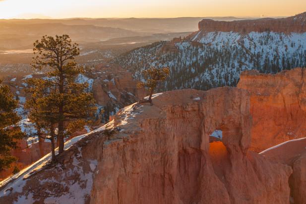 Red Pine Sunrise