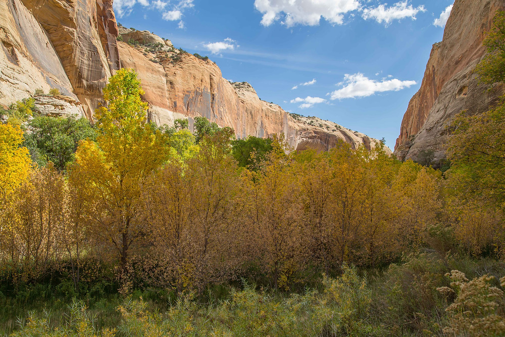 Trees and all types of plants grow in the waters from Lower Calf Creek near Escalante, Utah