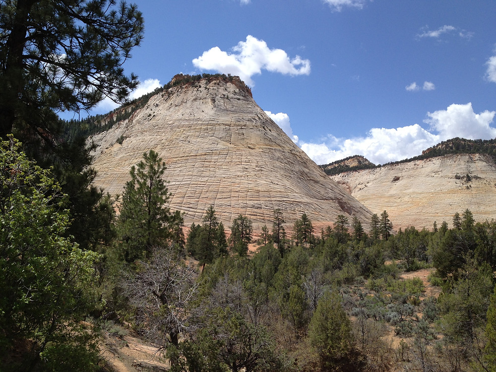 Checkerboard Mesa is a highlight of the Upper Ride in Zion National Park