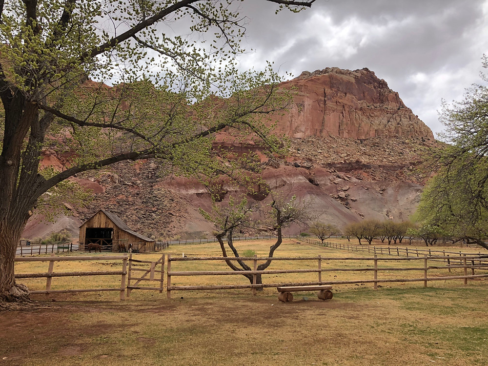 The Historic town of Fruita with its Orchards are located near the Gifford House in Capitol Reef National Park