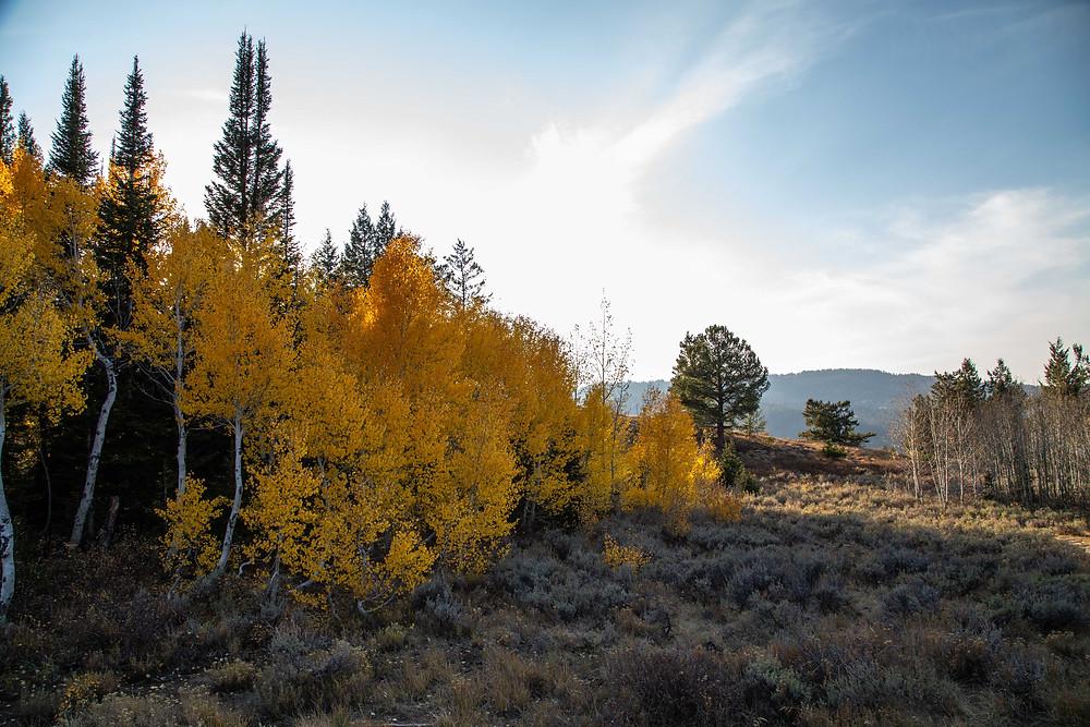 Fall colors on the Limber Pine Trail near Bear Lake Utah