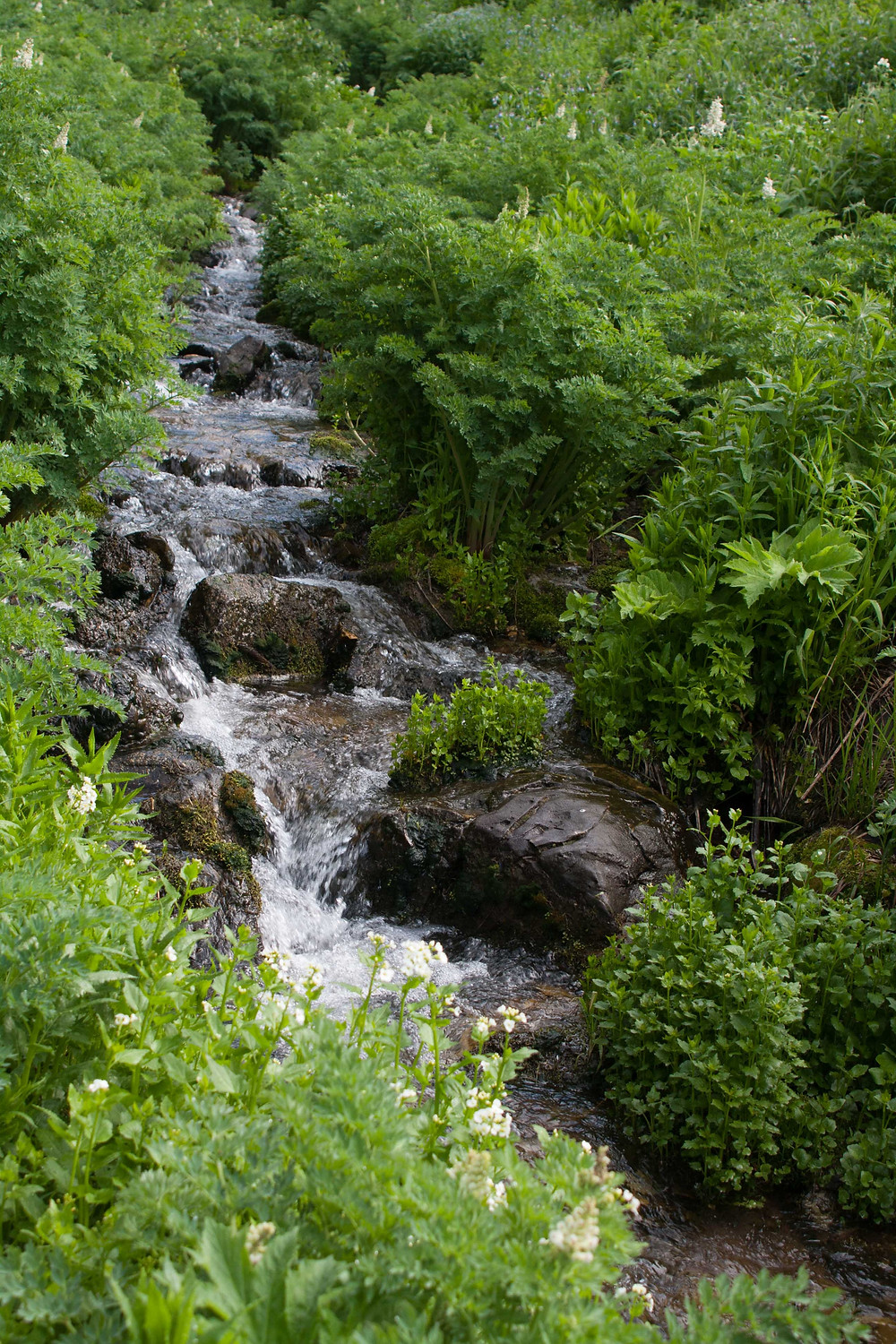 This mountain stream runs along the Mill D trail as you make your way to Dog Lake, Big Cottonwood Canyon, near Salt Lake City Utah
