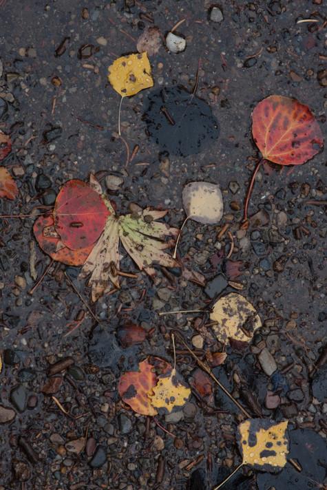 Autumn Leaves, Big Cottonwood Canyon