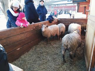 大人も楽しい、もふもふに癒されるカンペンこども動物農場 KØBB