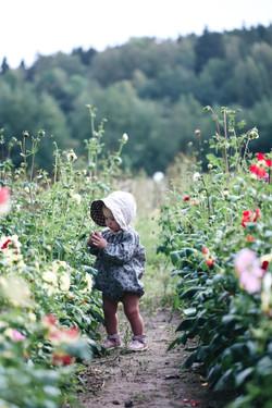 blommorna8 2