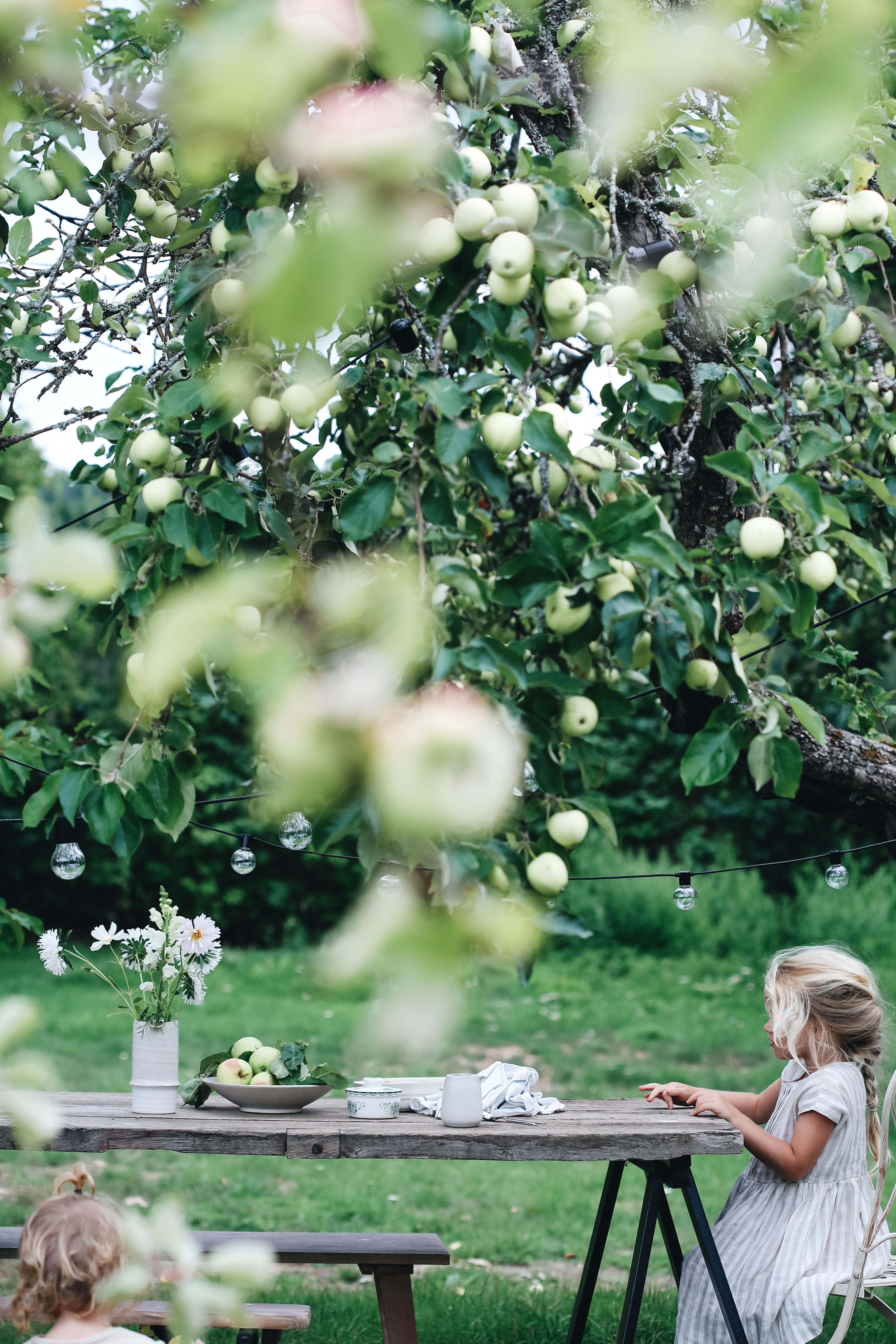 äpplen14