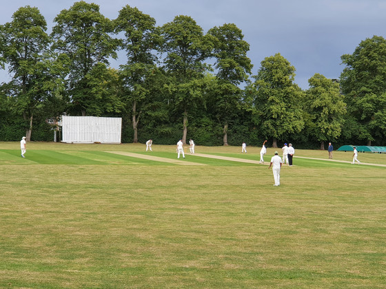 Cricket is back! Jesters victorious!
