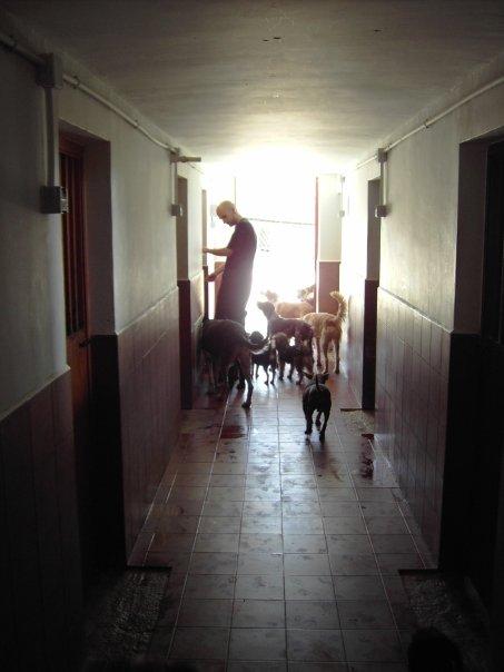 Verzorgen van een roedel asielhonden in Spanje