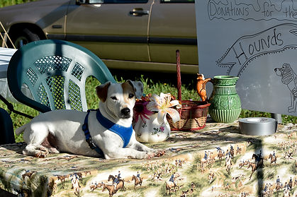 Petey the Jack Russel Terrier guarding the hound jar