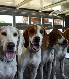 Gaelyn, Puppy Hampton, Fern, Diane, and Falcon