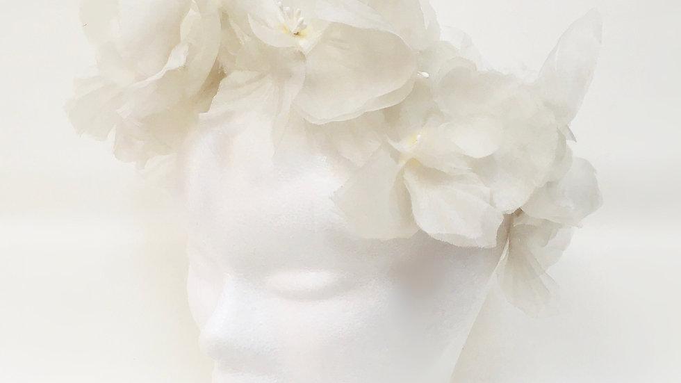Tiara Wildorchids