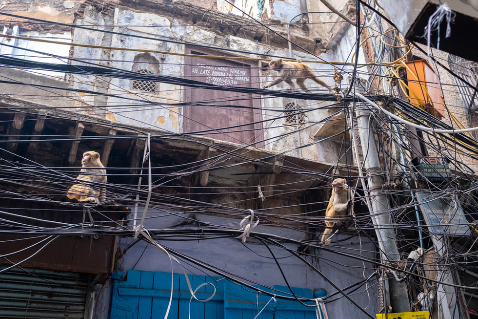 India_12_Monkeys On Wires.jpg