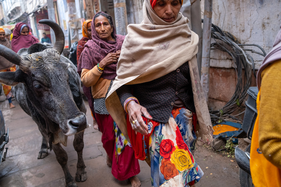 India_5_Pilgrims _ Cow in Alley.jpg