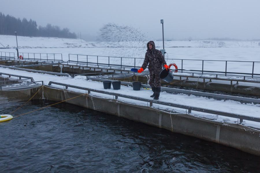 Кормление рыбы (фотоотчет)